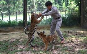 """Vinpearl Safari Phú Quốc chào đón """"Thế hệ F1"""" với nhiều cá thể quý hiếm"""