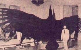 Có thể bạn không tin nhưng đây là những sinh vật khổng lồ nhất xuất hiện trên Trái đất