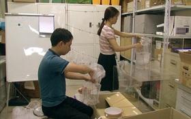 """Việt Nam nuôi thử nghiệm loại muỗi làm """"ức chế"""" muỗi gây sốt xuất huyết"""