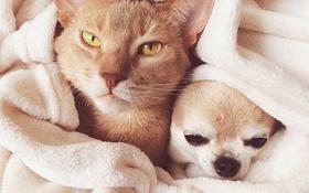 14 đôi bạn chó mèo tưởng không thân mà thân không tưởng