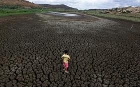 Chùm ảnh: Hạn hán 5 năm liên tiếp, bò chết khát, người héo hon tại Brazil