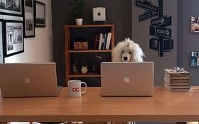 15 chú chó làm việc chăm chỉ chẳng kém gì con người