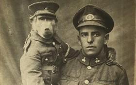 """Cuộc đời kỳ lạ của chú khỉ đầu chó Jackie: """"Người lính"""" dũng cảm được vinh danh sau chiến tranh thế giới thứ nhất"""