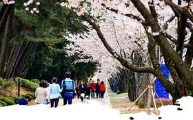 Hàn Quốc – Đến là yêu