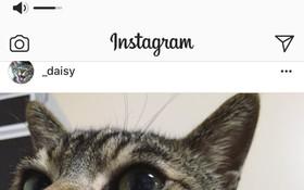 Chỉ cần một thay đổi nhỏ của Instagram cũng đủ dạy cho Apple một bài học