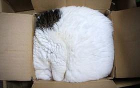 17 chú mèo vô duyên thích chỗ nào là tự tiện chui vào đấy