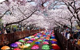 Hàn Quốc – Mỗi bước chân là một trải nghiệm