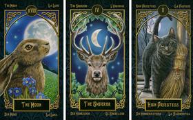 Lật một lá bài Tarot động vật để giải mã con người nội tâm của bạn