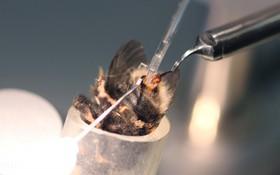 Đằng sau sự ngọt ngào: Sự thật khủng khiếp bên trong các trại nuôi ong lấy mật