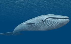 """Dù """"lẻ bóng"""" nhưng vẫn luôn lạc quan sống giống như chú cá voi cô độc nhất hành tinh này"""