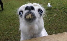 Khuôn mặt xấu đau đớn của 21 con vật kém ăn hình nhất quả đất