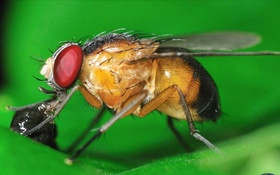 Bé bằng nửa hạt vừng nhưng loài sinh vật này lại đóng góp lớn trong nền nghiên cứu khoa học