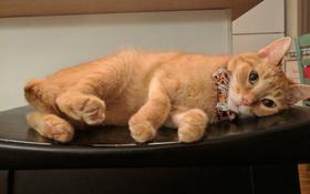 15 chú mèo bảnh trai ăn diện nhất trong ngày quốc tế mèo