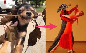 Bật cười với chú chó cắn cây siêu dễ thương bị dân mạng chế ảnh
