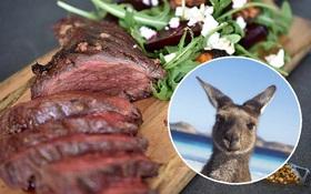 Úc: Chuột túi nhiều gấp đôi người, chính quyền huy động người dân ăn thịt Kangaroo