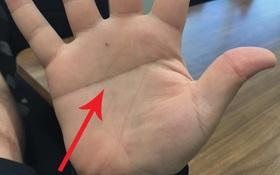 Đường chỉ tay của bạn có giống thế này không và bí mật ẩn giấu đằng sau đó