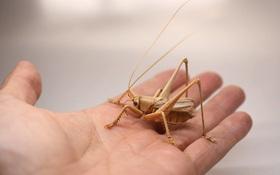 Bộ sưu tập côn trùng tre giống hệt đồ thật của nghệ nhân Nhật Bản