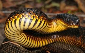 """Loài rắn sẽ bị mù khi hè sang - và sự thật khiến bạn """"rùng mình"""""""
