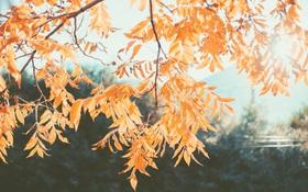 """Lật tẩy kẻ giấu mặt khiến tâm trạng chúng ta luôn """"tụt mood"""" vào mùa thu"""