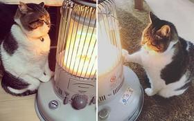 Phải lòng phải mặt với cái máy sưởi, chú mèo béo cứ ôm chặt mãi không rời