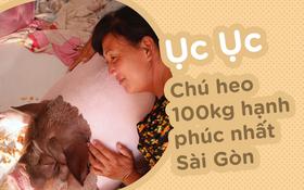 """Người mẹ đơn thân ở Sài Gòn nuôi heo 100kg như thú cưng trong nhà: """"Nó đang giảm cân, con gái con đứa gì mập quá chừng!"""""""