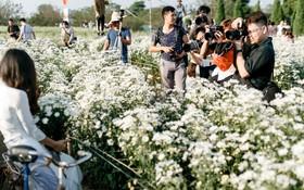 """Vườn cúc hoạ mi ở Hà Nội """"thất thủ"""" cuối tuần: 1 mét vuông có chục nhiếp ảnh gia và mẫu"""