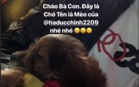 """Đức Chinh tậu cún mới, đặt luôn tên là """"Mèo"""""""