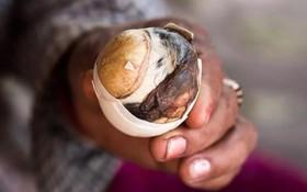 Thuỵ Điển thành lập bảo tàng: Những loại thức ăn kinh dị nhất thế giới, có tới 5 món quen ở Việt Nam được trưng bày