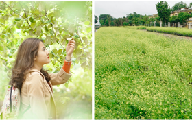 Trường ĐH duy nhất Việt Nam có vườn táo, vườn hoa cải được phép ăn tẹt ga, sống ảo cực chất chỉ với 15 nghìn