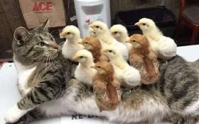 """15 tình bạn thân thiết của động vật có thể khiến bạn phải """"gato"""""""