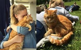 Chú mèo hữu dụng nhất thế giới: Đến trường hằng ngày giúp sinh viên xả stress