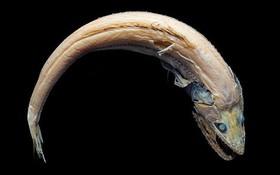 Phát hiện 5 loài sinh vật biển có ngoại hình kỳ dị tưởng chừng chúng không thuộc về hành tinh này