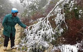 Cận cảnh băng tuyết phủ trắng núi rừng Mù Cang Chải