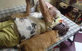 Chú mèo Messi mập ú: Xưa là mèo hoang, 10 năm qua lại là bạn thân nhất của ông nội 91 tuổi!