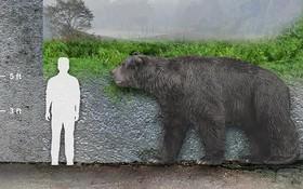 Phát hiện hóa thạch gấu có niên đại 120.000 năm tại Argentina