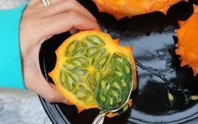 Loại dưa đầy gai vị giống kiwi có giá 400k/quả ở Việt Nam có gì đặc sắc