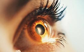Hai ca mù lòa do thoái hóa hoàng điểm đầu tiên trên thế giới được chữa khỏi nhờ tế bào gốc
