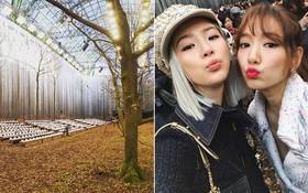 """Có show nào """"xôm"""" hơn Chanel: Dàn sao hot Hoa-Hàn-Thái hội tụ, cùng lạc lối trong khu rừng mùa thu"""