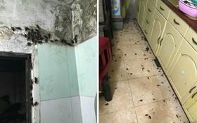 """Hình ảnh gây ám ảnh nhất Facebook hôm nay: Căn nhà """"thất thủ"""" vì bị gián tấn công sau mưa"""