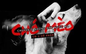 Chuyện ở những đất nước mà chó mèo có hai số phận: Được cưng chiều hết mực, hoặc oặt mình trong lồng cũi tới bàn tiệc