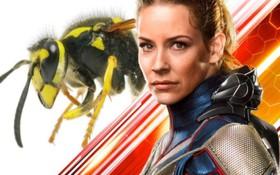 """""""Chị Ong Nâu"""" của """"Ant-Man 2"""" oan ức chia sẻ vừa bị chính... ong thật đốt"""