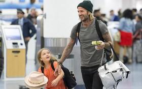 Thương bố thật nhiều, bé Harper chẳng thể rời mắt khỏi David Beckham tại sân bay