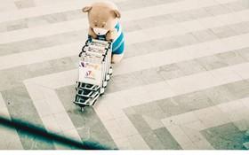 Gia đình gấu mập cực dễ thương làm náo loạn sân bay casino o viet nam Đà Nẵng