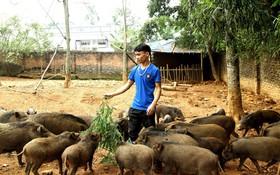 18 tuổi bỏ Đại học, về nhà nuôi lợn rừng kiếm 250 triệu đồng/năm