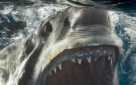 Loạt ảnh cận cảnh từng chi tiết hàm răng sắc nhọn và ánh mắt dữ tợn của cá mập trắng - hung thần đại dương khiến ai cũng khiếp sợ