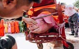 """Ảnh, clip: Hàng trăm người dân tập trung chứng kiến nghi lễ chém lợn kín ngày đầu năm, máu 2 """"ông Ỉn"""" chảy lênh láng"""