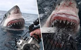 Thợ lặn bất chấp nguy hiểm chụp cận cảnh hàm cá mập ở khoảng cách vài chục centimet