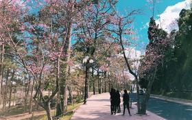 Ngôi trường Việt có khuôn viên đẹp như khung cảnh phim Hàn khiến dân mạng đổ xô đi tìm danh tính