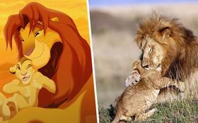 Mufasa và Simba phiên bản đời thật: Khoảnh khắc sư tử con nũng nịu trong vòng tay cha khiến ai xem cũng tan chảy trái tim