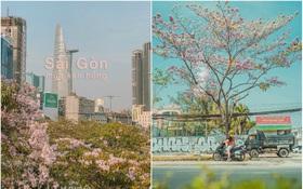 """Hội Sài Gòn rục rịch check-in """"con đường hoa anh đào"""" lên hình tình như phim điện ảnh, ai đi ngang cũng muốn dừng lại sống ảo"""